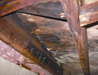mold and rot in a Lethbridge crawl space