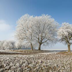 Frost covering trees and a grassy field in Scapa