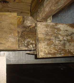 Extensive basement rot found in Lethbridge by Doug Lacey's Basement Systems