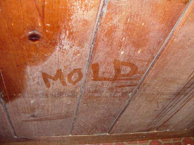 how to clean black mold from wood furniture