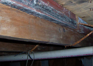 Rotting, decaying wood from mold damage in Hussar