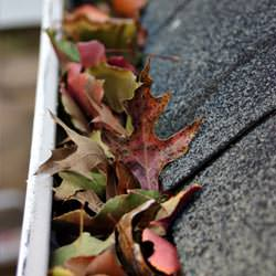 Clogged gutters filled with fall leaves  in Michichi